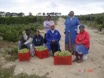 """Gutschein - """"Südafrika Weinseminar"""""""